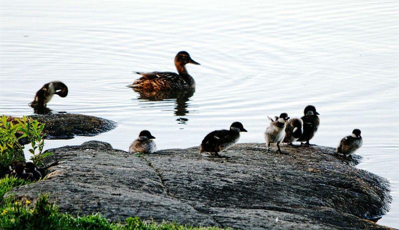 Close-up Birds Of EyeEm  Birds🐦⛅ Nature Littoisten Järvi Beauty In Nature Think Positive