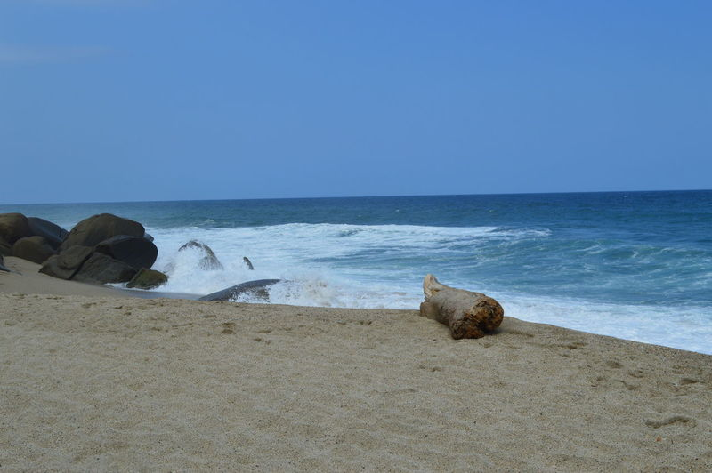Animal Themes Animals In The Wild Beach Beauty In Nature Clear Sky Day Horizon Over Water Mammal Nature No People Outdoors Rock - Object Sand Scenics Sea Sea Life Sea Lion Sky Water Wave