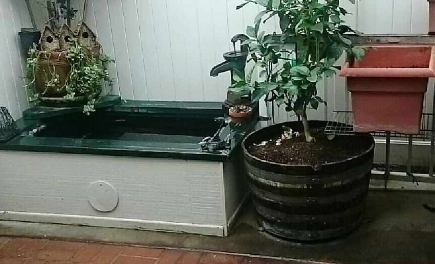 Patio, yard, No People Home Interior Architecture Plant Potted Plant Day Indoors  EyeEmNewHere