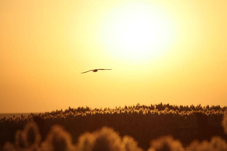 The Juyan Lake is located in the western part of Inner Monogolia. A former lake in the Gobi desert. Sunrise Silhouette Banner Of Inner Monogolia Ejin Ejina Inner Monogolia Sunrise Sunrise And Bird Sunrise And Birds