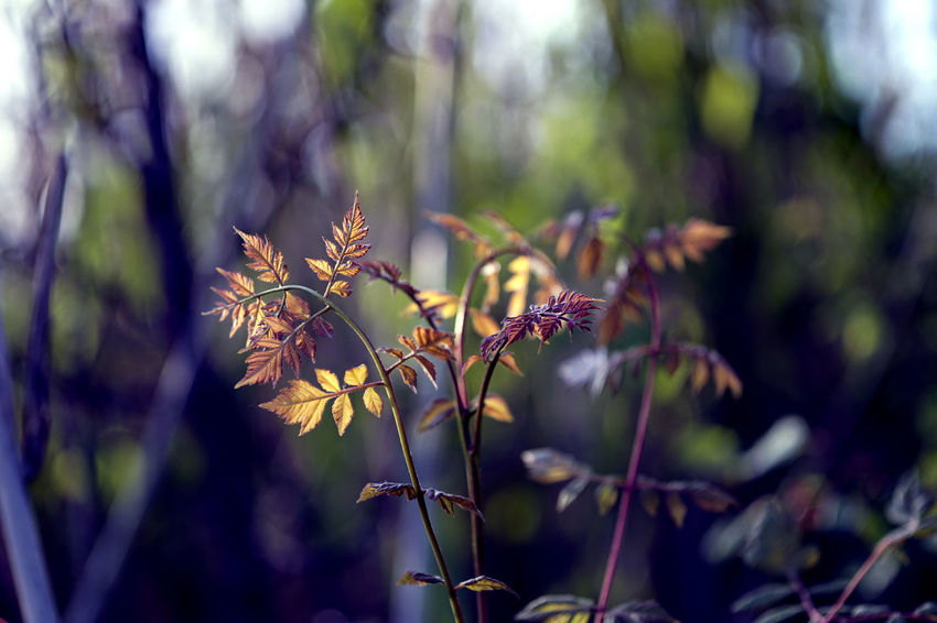 Beauty In Nature Close-up Day Flower Flowering Plant Focus On Foreground Fragility Freshness Growth Land Nature No People Outdoors Plant Plant Part Purple Selective Focus Sunlight Tranquility Tree Vulnerability