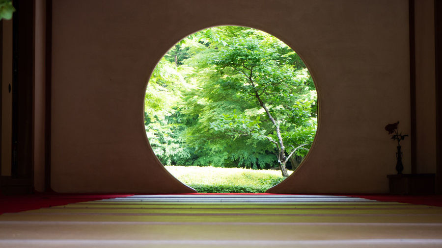 Trees seen through window of house
