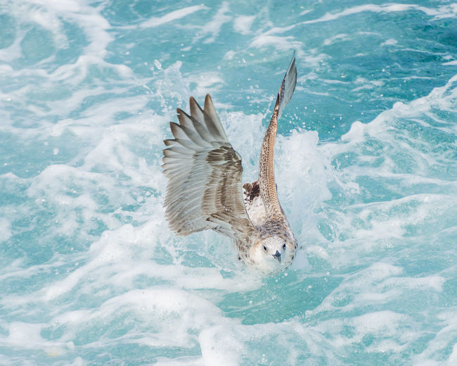 View of a bird flying over sea