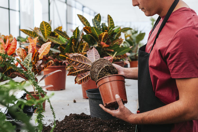 Midsection of man holding potted plant