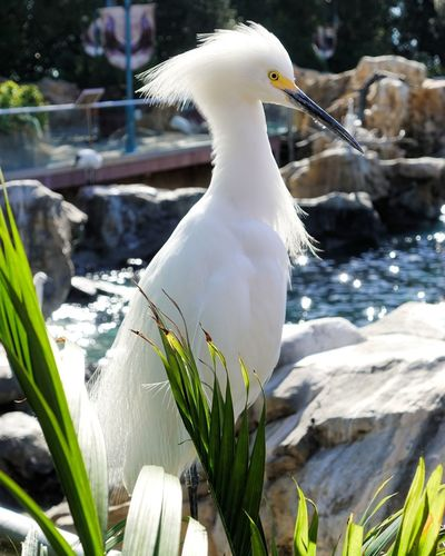 Animal Wildlife Bird One Animal Animals In The Wild Outdoors Nature No People Day Close-up Beauty In Nature Animal Themes