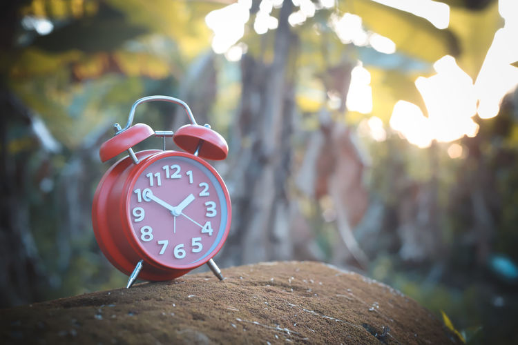 Alarm Clock Focus On Foreground Alarm Clock Clock Time Number Tree Close-up No People Clock Face Outdoors Red Shape Nature Day Circle Geometric Shape Minute Hand Accuracy Wood - Material Clock Hand