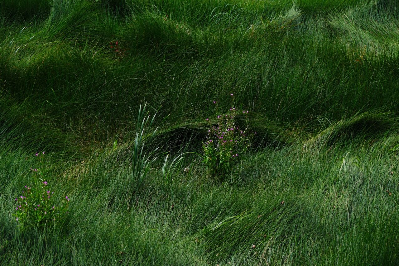 High Angle View Of Grasses On Field
