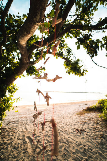 Tree Plant Nature Land Sand Beach Day Sunlight Leisure Activity Sky Full Length Beauty In Nature Outdoors Childhood Real People Water Two People Branch People Playing Rope Swing