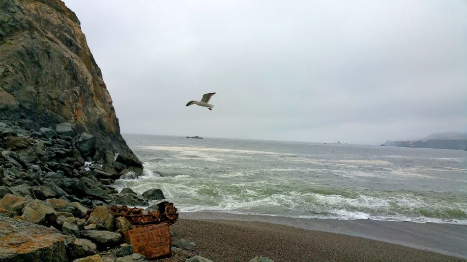 Antique rusted power shovel washed ashore. Seagull hanging in air. Flapping Waves Rusted Power Shovel Old Moody Seagull In Flight Seagull Colorful Zen Left Justified Sandy Beach Pattern Bird Flying Sea Beach Rock - Object Sky Seagull Spread Wings Black-headed Gull Flight Flapping Avian Foggy Shore Sea Bird