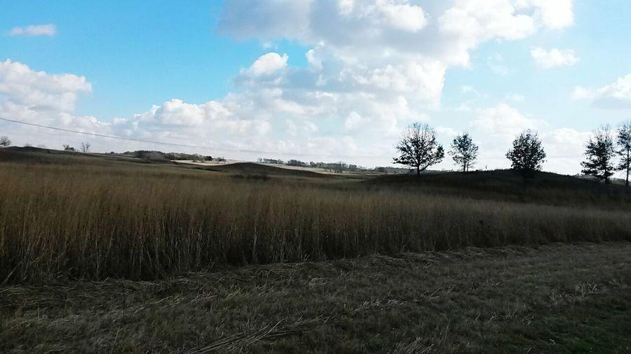 Buffalo Farm Landscape Prarie Grassland Clouds And Sky