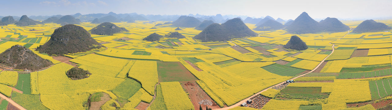 Rapeseed flowers of Luoping in Yunnan China ASIA Beauty In Nature Bees China Day Honey HoneyBee Idyllic Landscape Luoping Minority Mountain Mountain Range Nature Rapeseed Rapeseed Blossom Rapeseed Field Scenics Sky Tradition Tranquil Scene Tranquility Yellow Yunnan Yunnan ,China