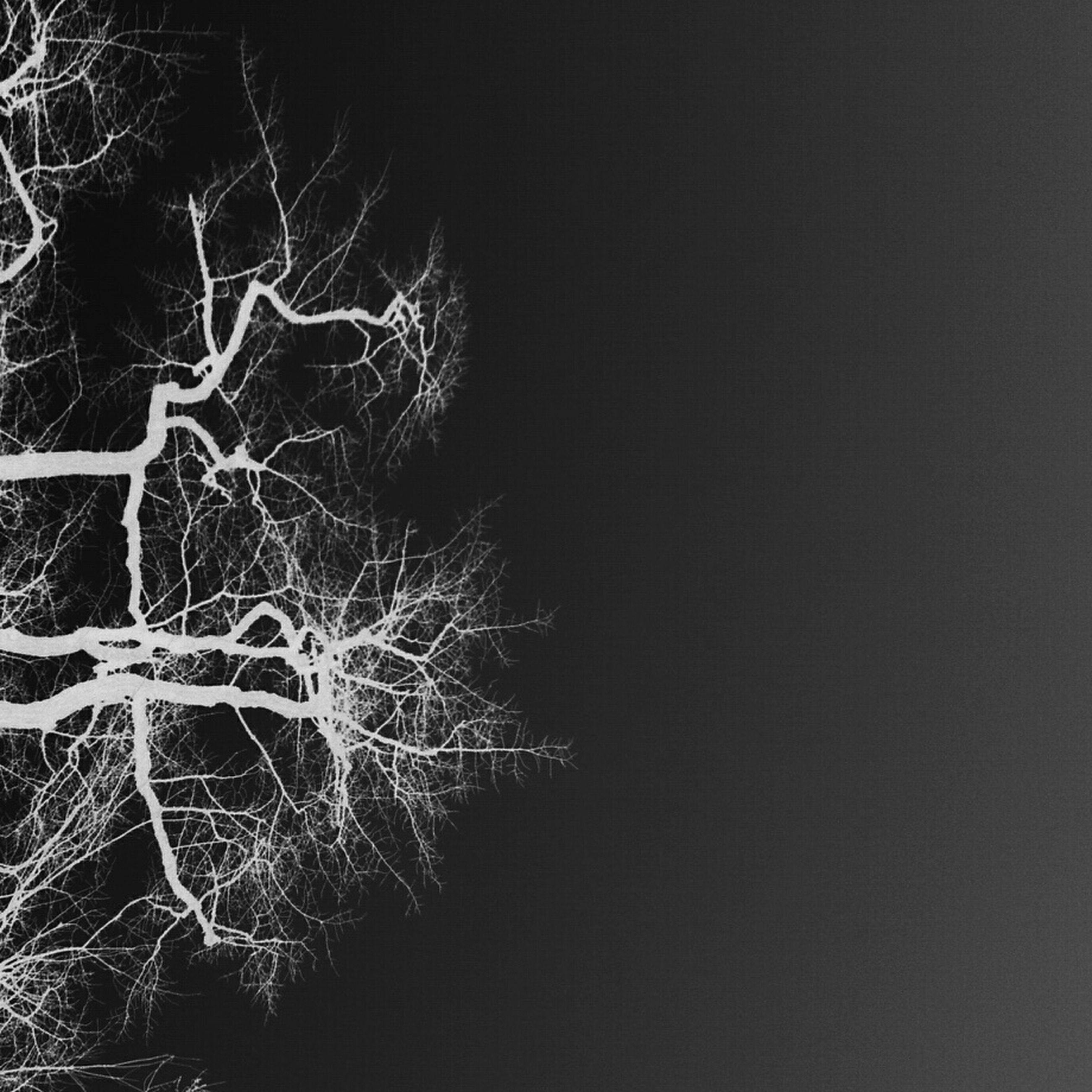 night, low angle view, branch, close-up, nature, tree, outdoors, illuminated, no people, bare tree, dark, growth, copy space, abstract, beauty in nature, pattern, black background, long exposure, clear sky, sky