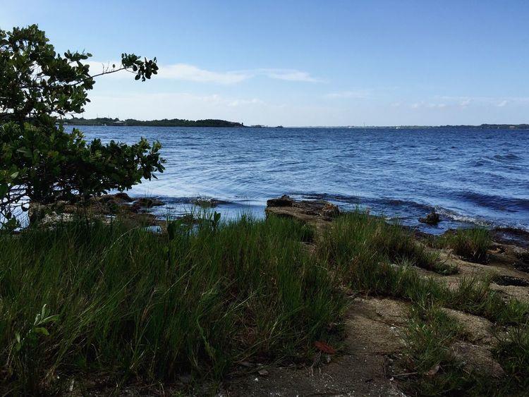 Indian River shoreline at Suntree Rotary Park Suntree Florida Indian River Indian River Lagoon Shoreline