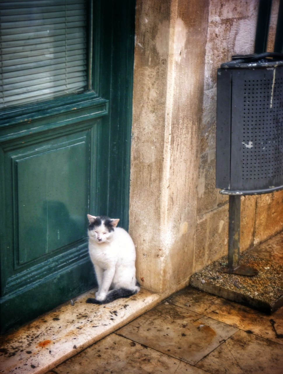 sitting, one animal, animal themes, no people, pets, mammal, portrait, day, outdoors