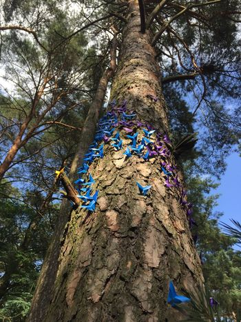 Blue & Purple Origami Butterflys Wood Tree Nature