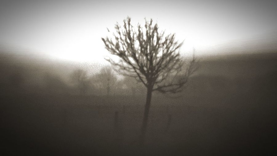 Tree Tristesse Trist January Winter EyeEmNewHere