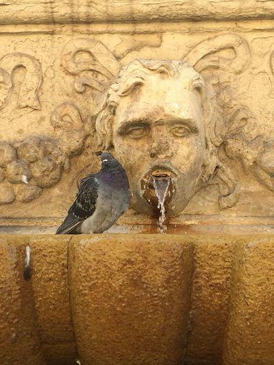 Bologna Bird