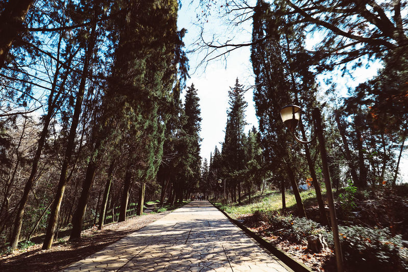 Empty road along trees in forest