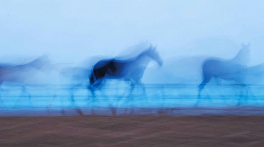 P.R.E... Pura Raza Española Horses Caballos