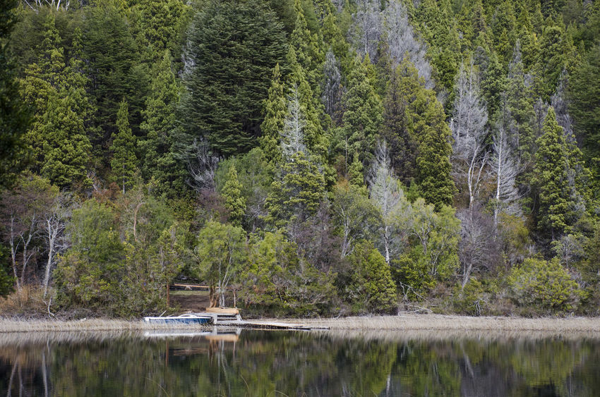 Landscape_Collection Reflection Bariloche, Argentina Beauty In Nature Day Forest Green Color Growth Lake Landscape Landscape_photography Nature No People Outdoors Patagonia Pine Tree Plant Reflection Scenics Tranquil Scene Tranquility Tree Water