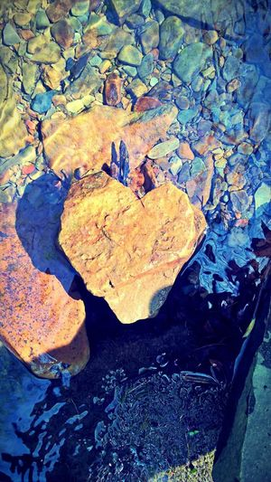 No People Leaf Love Autumn Close-up Heart Shape Nature Outdoors Day Beauty In Nature Maple
