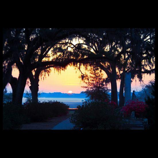 Bonaventure Mourning Blue Sorrow Memento Mori Cemetery Cemeteryscape Bonaventure Cemetery Mossy Oaks Sunrise