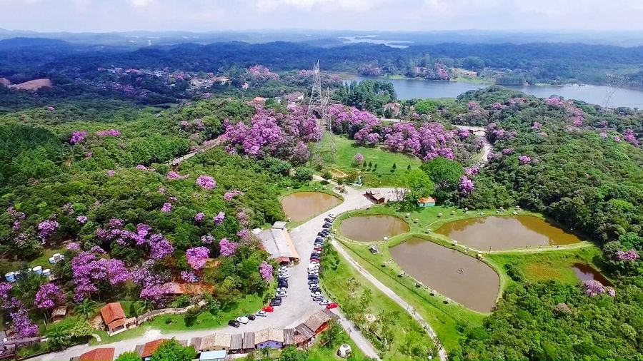 Posada dos Pescadores Aerial View High Angle View Purple Scenics Multi Colored Drone  phantom 3 dji Tree Landscape Outdoors Day Beauty In Nature Rural Scene Nature sky first eyeem photo EyeEmNewHere