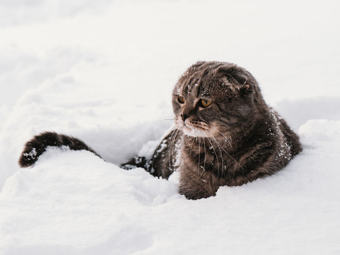 A cat at a snow covered field