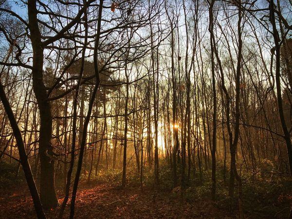 Woodland Sunrise Forest WoodLand Sunrise