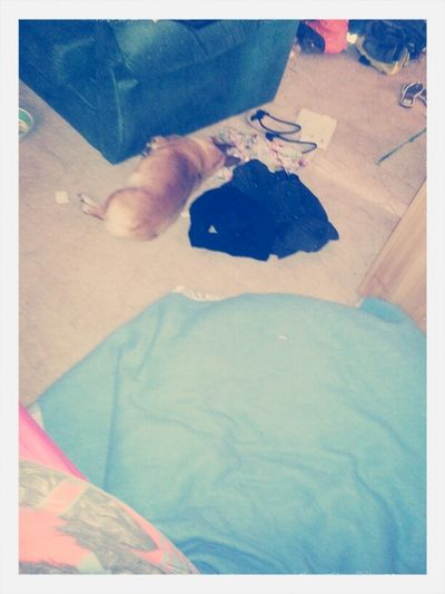My Dog Has A Perfectly Good Bed (the Blue Thing) But Decides To Lay Inbetween My Clothes And The Lounge O.O