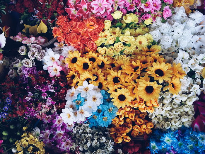 Multi Colored Variation Full Frame No People Nature Outdoors Day Fragility Flower Daily Life Storefront Flower Collection High Angle View Colors Of Life Colorful Colors Brasília - Brazil Brasiliangallery