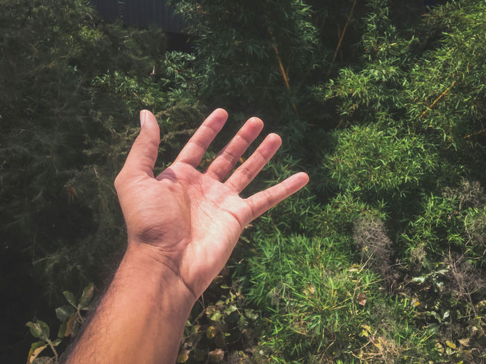 Cropped hand gesturing against plants