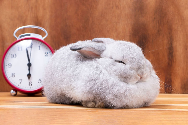 Mammal Clock