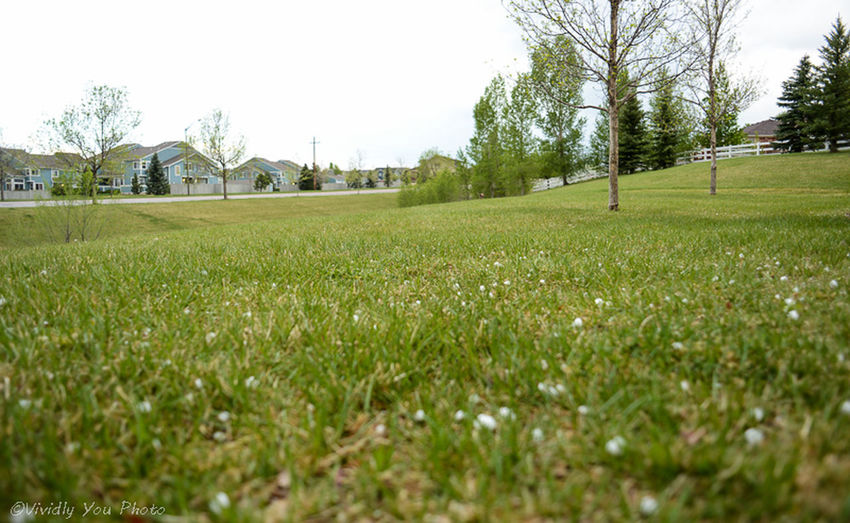 Hail on the lawn Taking Pics Landscape Enjoying Life