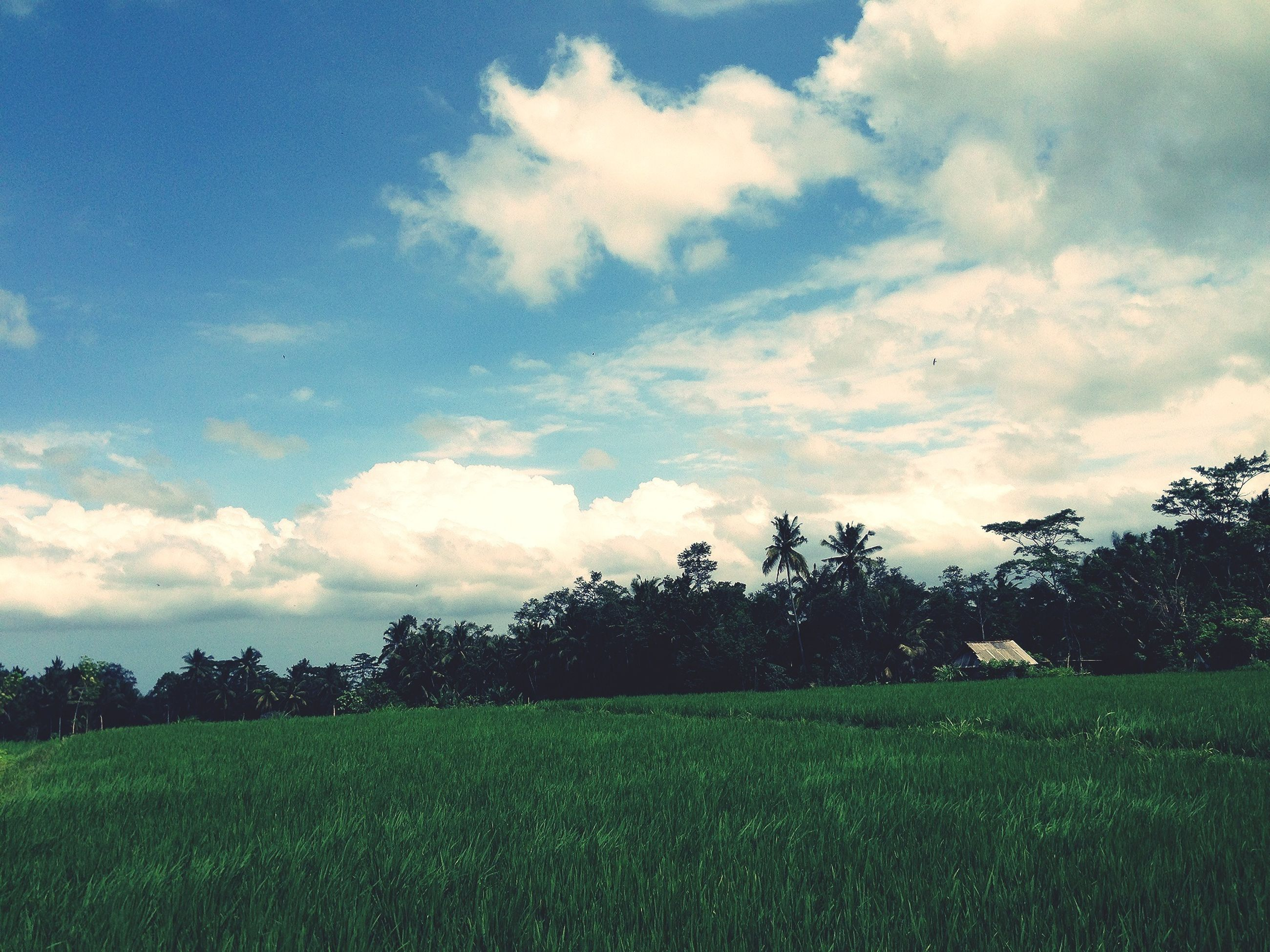 field, sky, landscape, grass, tranquil scene, tranquility, tree, beauty in nature, scenics, nature, cloud - sky, growth, grassy, green color, cloud, rural scene, cloudy, idyllic, outdoors, agriculture