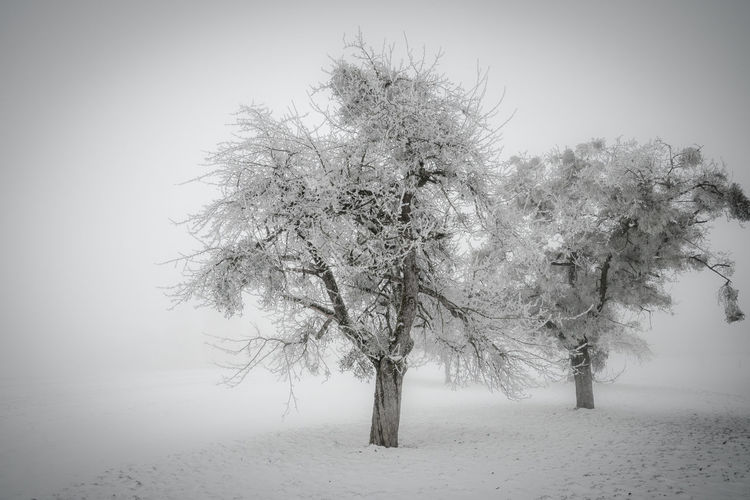 Beauty Beauty In Nature Cold Temperature Nature No People Outdoors Tree White Background Winter Olympus OM-D E-M5 Mk.II Snow ❄ Schnee Winter Wonderland White Backround Blackandwhite Wintertime Fog Nebel Fine Art Photography Fine Art