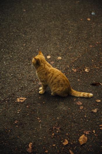 Cat on Naoshima