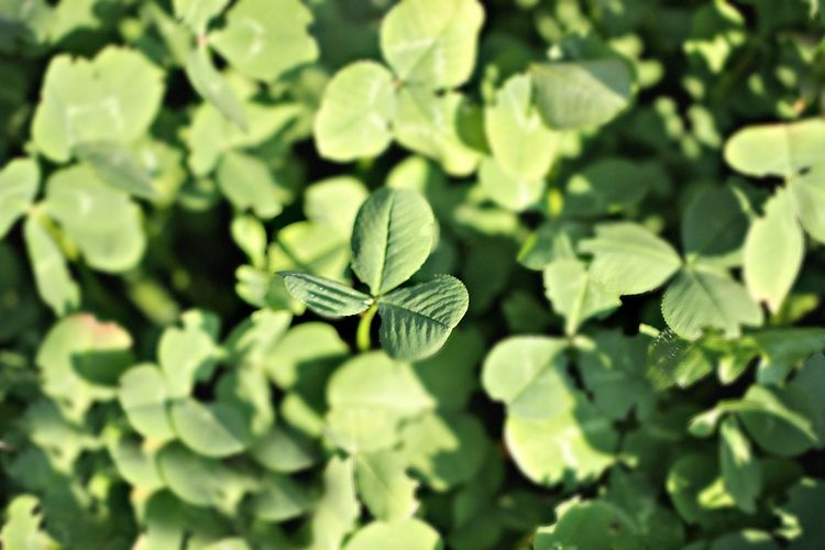 Green Color Plant Part Leaf Plant No People Growth Nature Backgrounds Focus On Foreground Selective Focus Close-up Beauty In Nature Day High Angle View Fragility Full Frame Tranquility Outdoors Vulnerability  Freshness Autumn Mood