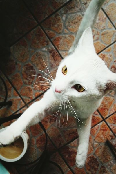 One Animal Pets Cat♡ Old Cat Lasy