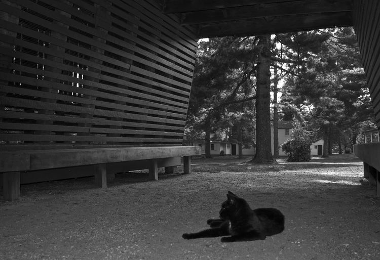 Architecture Tree Building Exterior Built Structure Relaxation City Outdoors Day Footpath Solitude In Front Of Domestic Animals Homelessness  Tranquility New Jersey Photooftheday Blackandwhite Black & White Monochrome Njphotographer Black And White Black Color Black Cat Animal Monochrome Photography