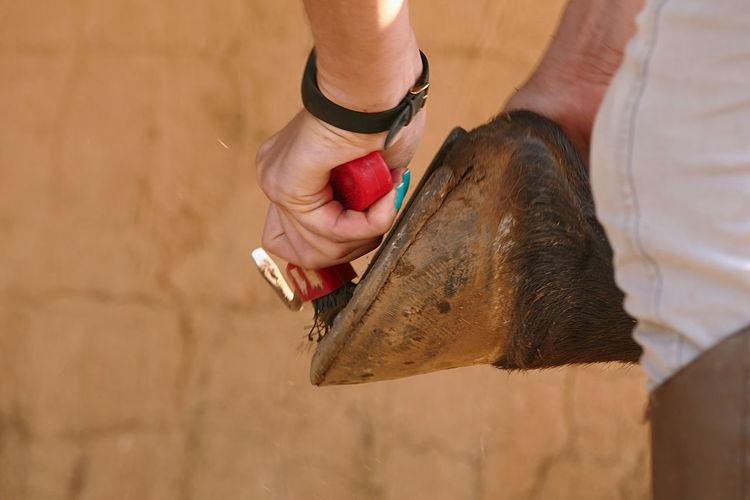 Woman brushing hoof outdoors
