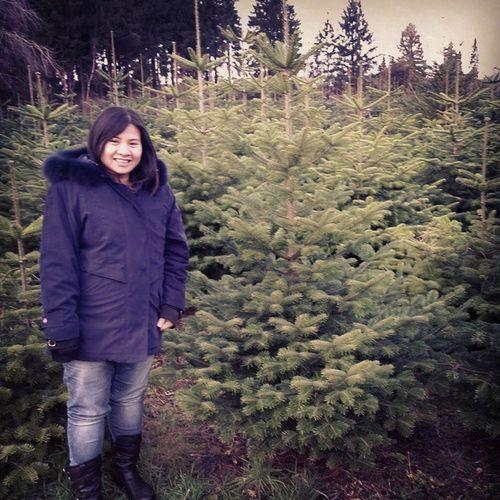 Unser Sieger Weihnachtsbaum - DSDW Baumschule Staack