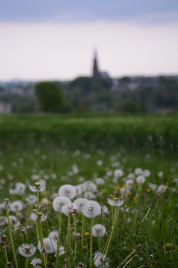 Plant Nature Growth Grass Field Flower Land Flowering Plant Beauty In Nature No People Freshness Close-up Mushroom Landscape Day Focus On Foreground Environment Fungus Vulnerability  Fragility Outdoors