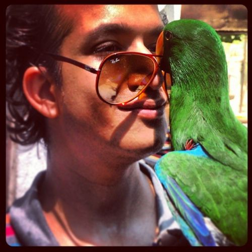 Electus Parrot Playing with my Shades pets handraised handtamed birds talkingparrot cute colorful picturesque animalslove petslove
