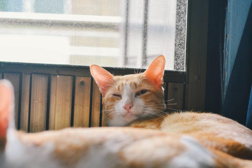 Animal Cat Pets