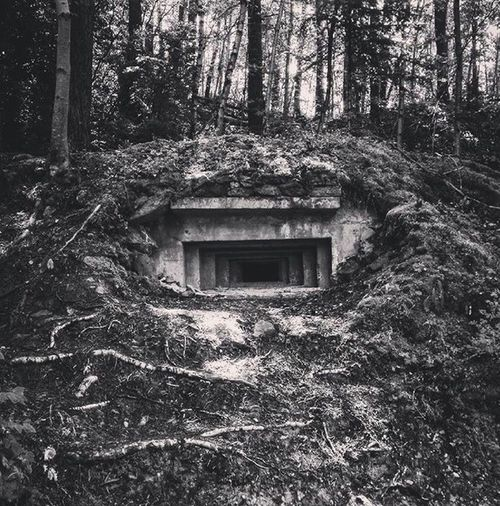 Un pasado muy presente Civil War Spain Bunker Linea P Canfranc Spaın Iphone7 Tree Built Structure Architecture Plant Building Exterior Building No People Residential District Abandoned Forest Growth Day Window