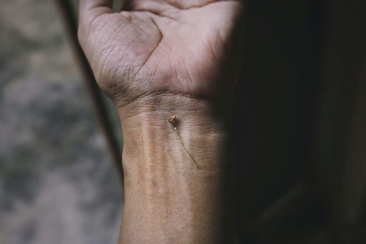 Visage Beautiful Emotional Photography EyeEm Selects This Is My Skin Hand Macro Nature Human Hand Limb Close-up Wrist Joint - Body Part Skin Body Part Human Joint This Is Natural Beauty