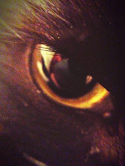 Cat Cat Eyes Neko Furmagoo Close-up Feline