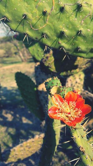 Hot Day! Excelent Day Photo♡ PhonePhotography Photography Nature I Love Nature! Cactus Flower Live For The Story
