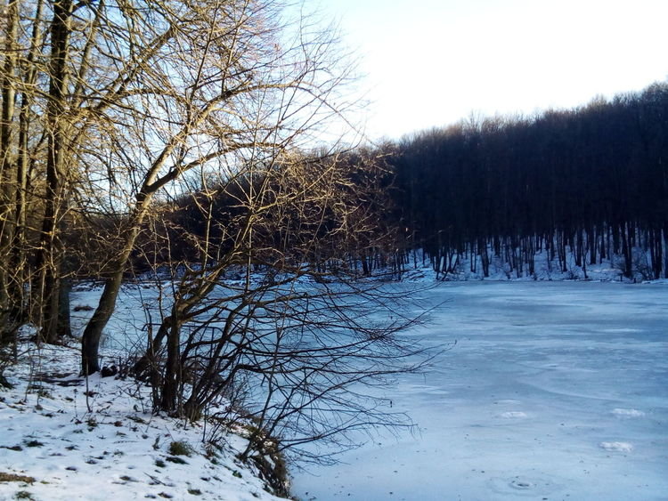 Cold Temperature Winter Snow Tree Nature Weather Sky Bare Tree Tranquility Beauty In Nature Outdoors No People Tranquil Scene Day Growth Frozen Scenics Weather Water Lake Frozen Lake Frozen Landscape Beauty In Nature Frost